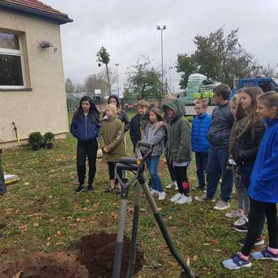 Galeria sadzenie_drzew_i_krzewow_na_terenie_szkolnym